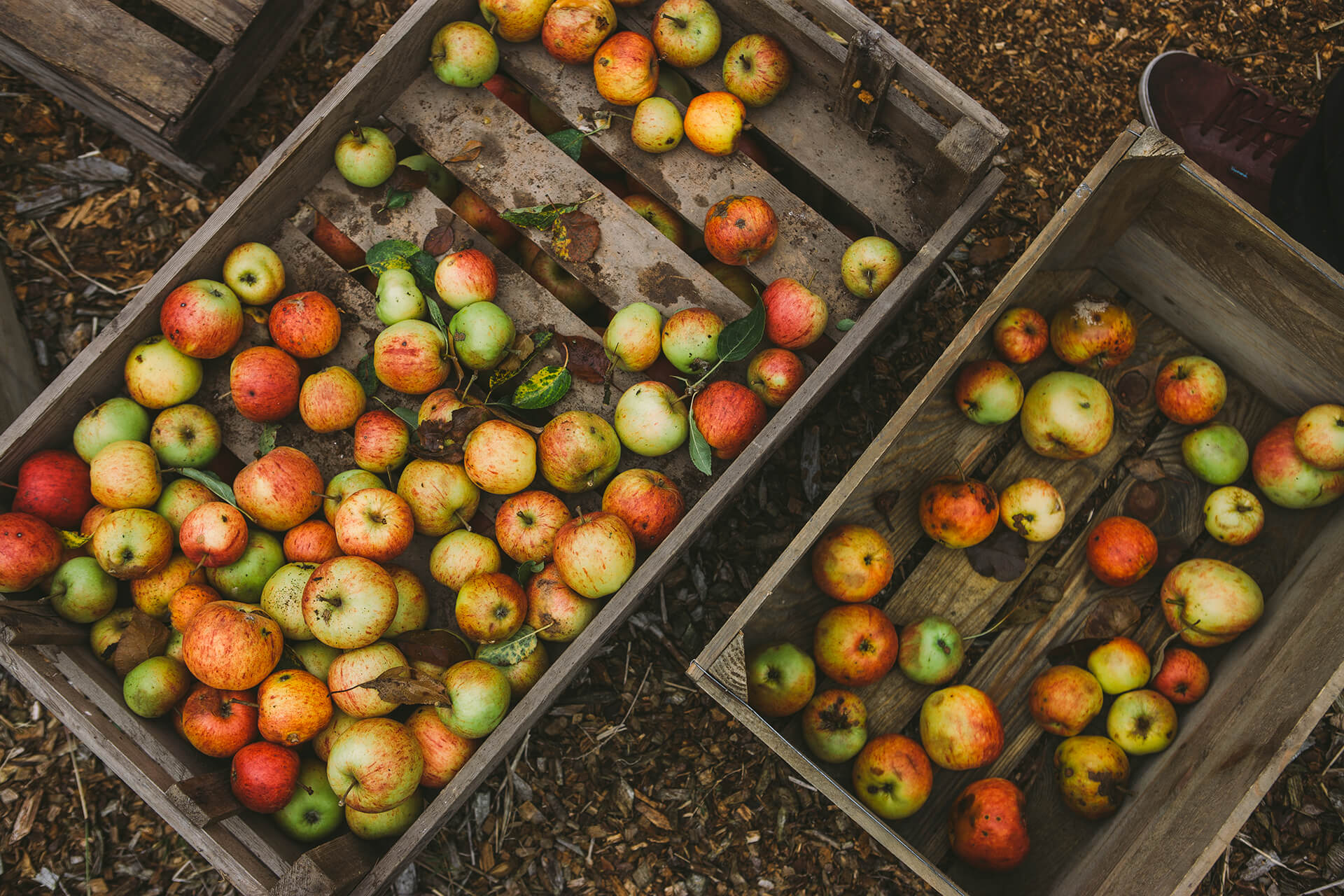 Daylesford, Daylesford Organic, Organic, Farm, Field, Green, Apples, Cider, Crate, Shoe, Grass, Landscape, Vegetables, Summer, Photography, Agency, Marketing, Gloucestershire, WeAreShuffle