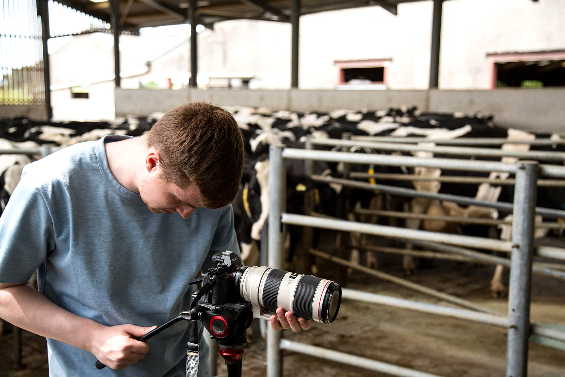 Wyke, Farms, Farm, Cheese, Dairy, Cows, Somerset, England, Britain, Film, Filming, Photography, agency, Sony, A7s, WeAreShuffle