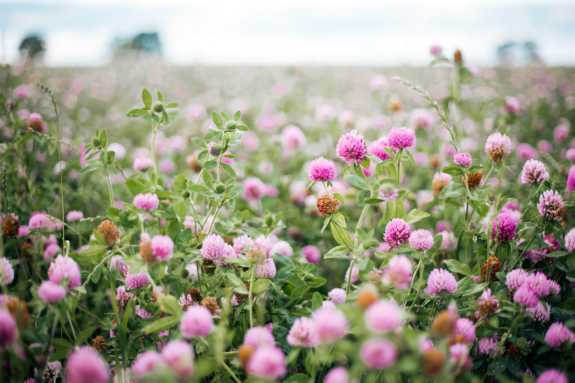 Daylesford, Organic, Farm, Field, Green, Grass, Sheep, Landscape, Summer, Photography, Agency, Gloucestershire, WeAreShuffle