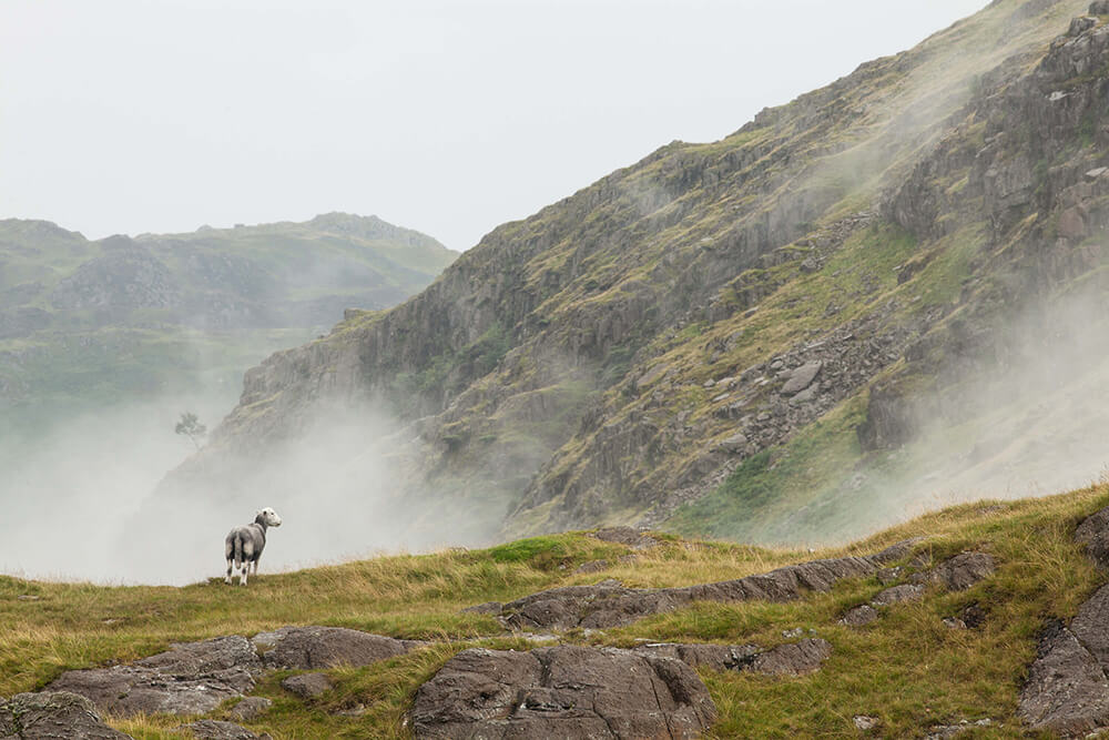 Cherchbi, Herdwick Common, Landscape, England, Photography, Agency, Film, Sheep, Fog, Hill, Mountain