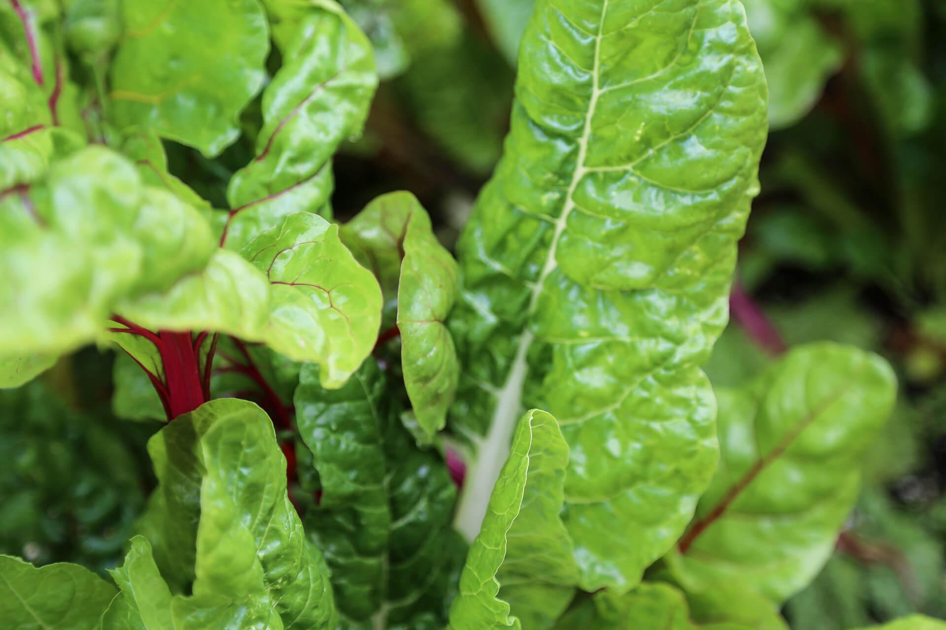 Organic, Growing, Daylesford, Photography, Film, Bee, Garden, WeAreShuffle, Agency, Farmer, Green